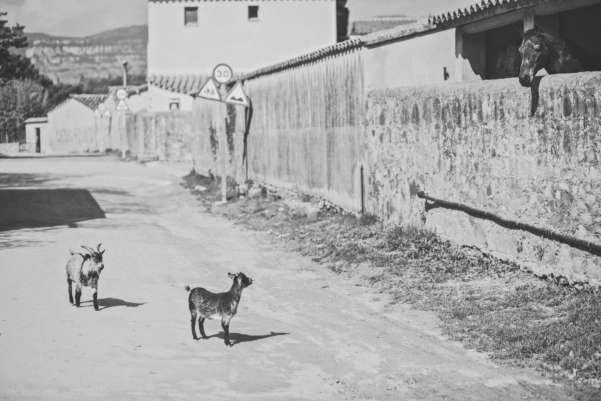 Can Ribas de Montbuí - Historia - Toni Oliver